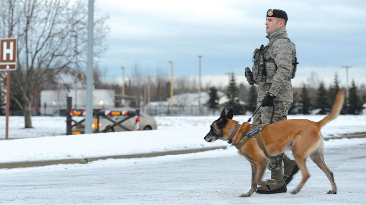 Security Force Airman with K9, Joint Base Elmendorf-Richardson, JBER
